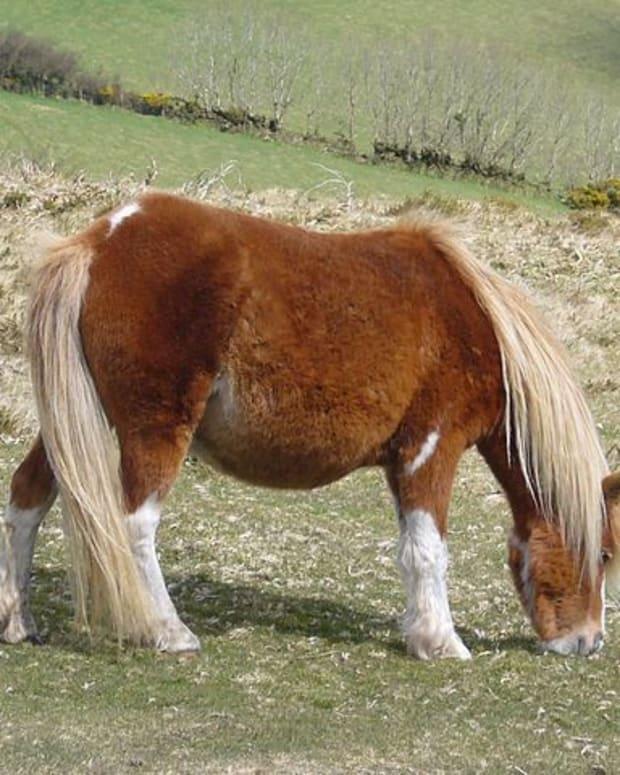 rare-horse-breeds-worlds-rarest-ponies