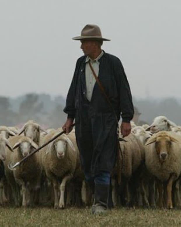the-shepherd-1