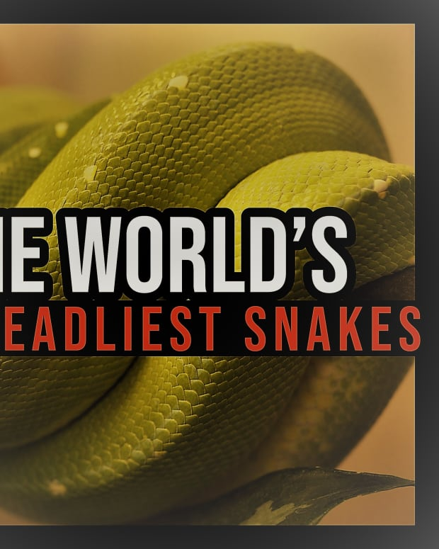 the-worlds-deadliest-snakes