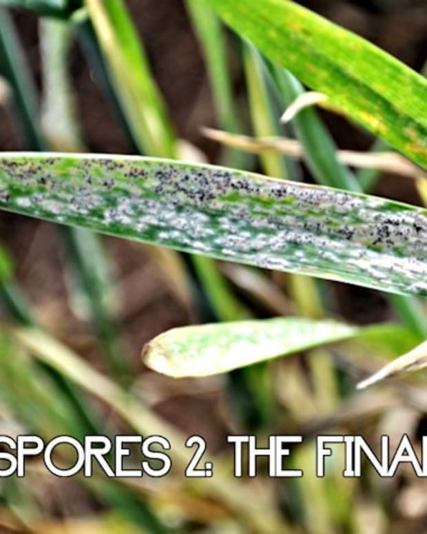 spores-the-final-assault-10