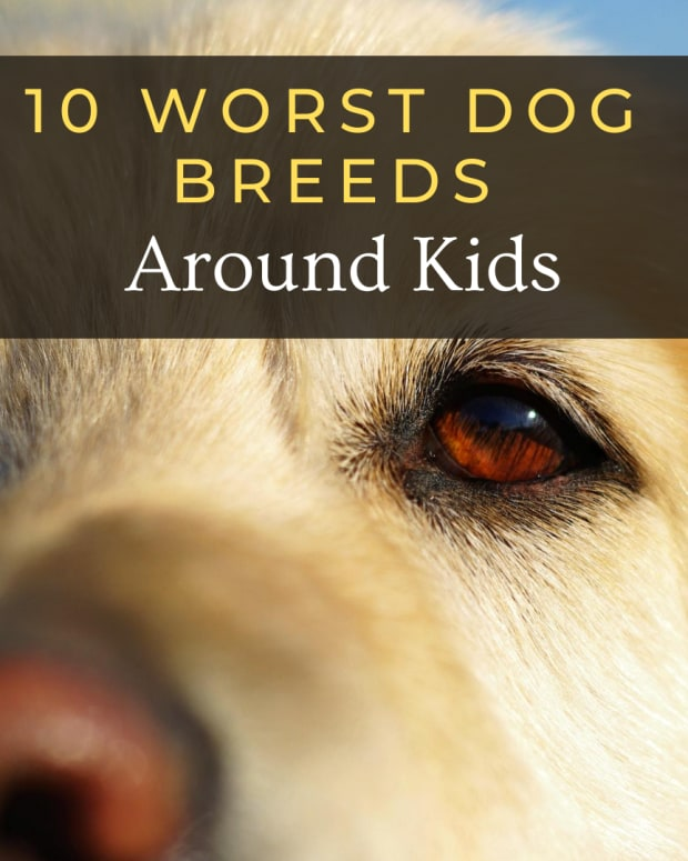 10-worst-dog-breeds-for-kids