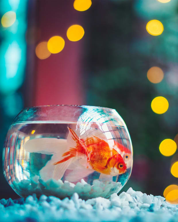 popular-fish-aquarium-owners-should-avoid