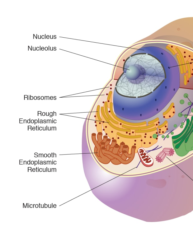 autophagy-mechanisms-and-effects-removing-cell-components