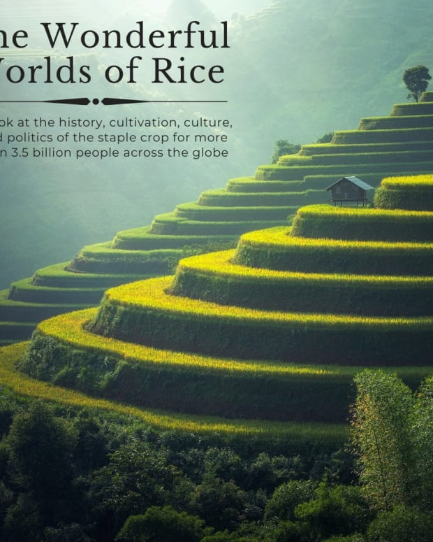 rice-the-staple-diet-of-half-the-world