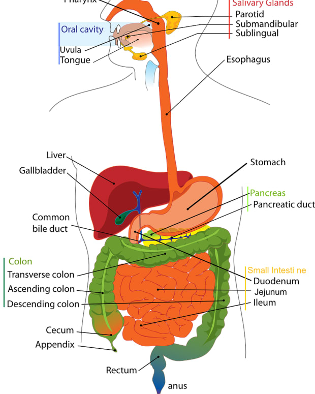 gastroesophageal-reflux-disease-gerd-facts