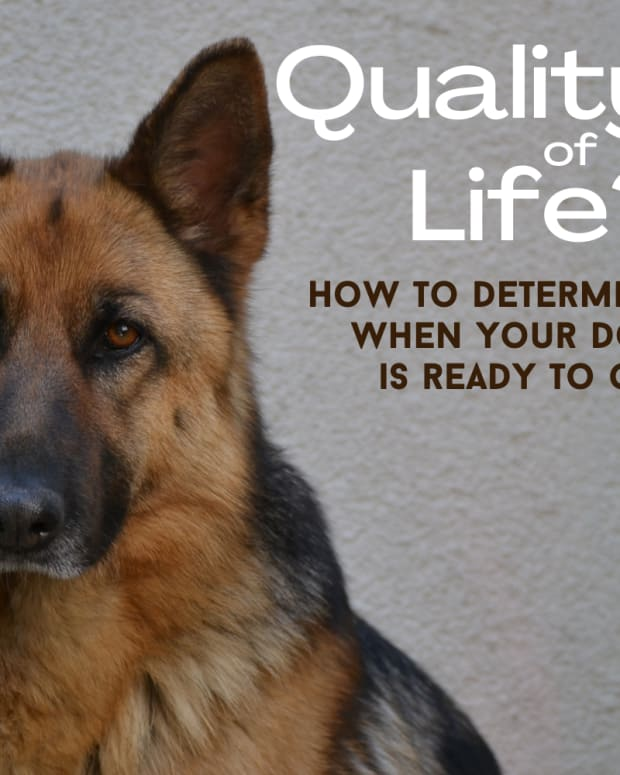 how-to-determine-a-dogs-quality-of-life