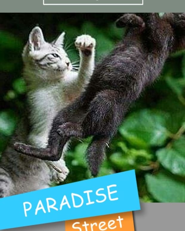 paradise-street-chapter-twenty-one