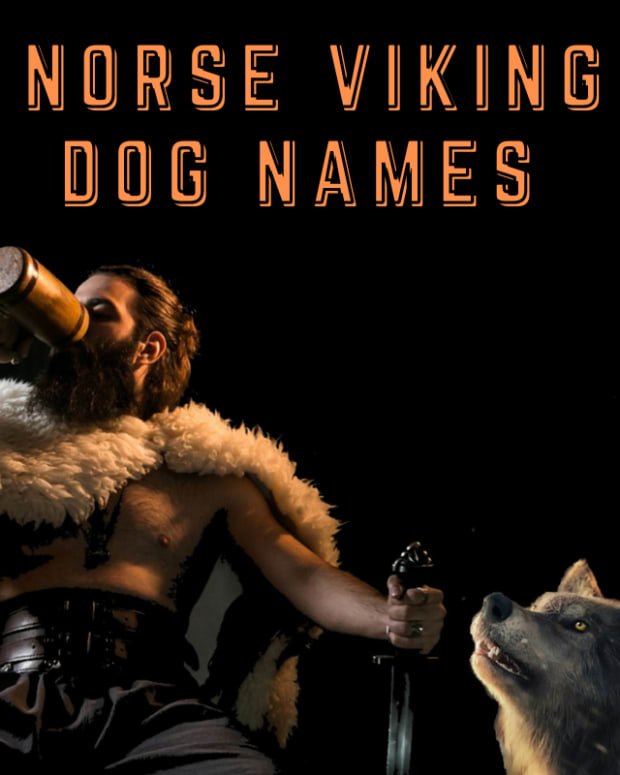 110-norse-viking-names-for-dogs-with-definitions