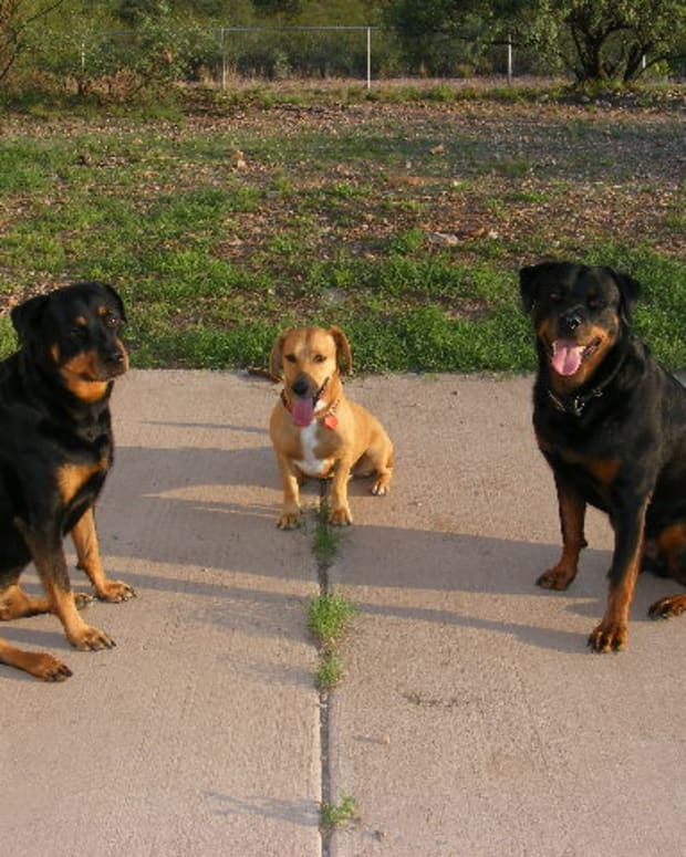 understanding-stimulus-control-in-dog-training