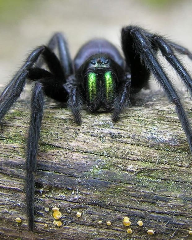 spider-evolution-adaptations-and-ancestors