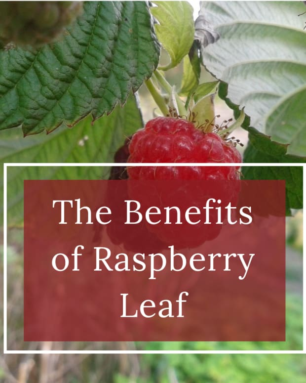 raspberry-leaves-herbal-remedies