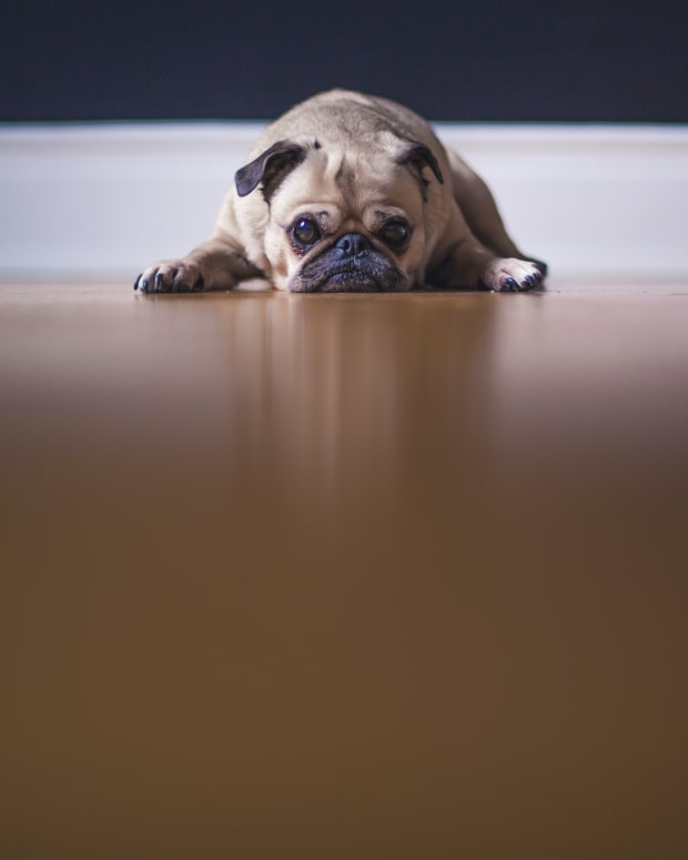 signs-your-dog-misses-you-when-youre-gone