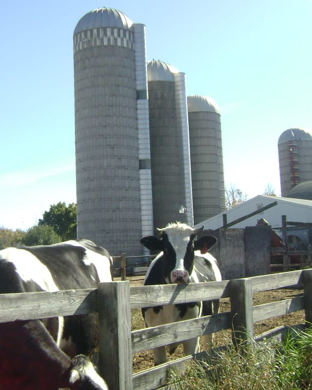 dairy-farming-in-wisconsin-part-1-feeding-a-herd-of-milk-cows