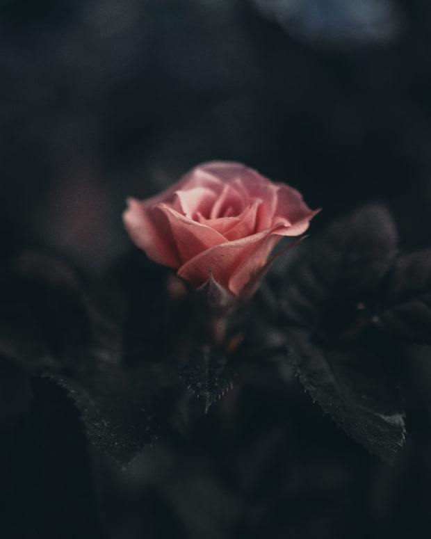 blooming-in-darkness