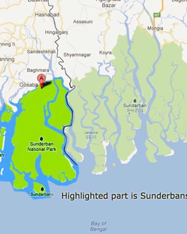 the-tiger-needs-the-crab-bengal-tiger-fiddler-crab-sundarban-national-park-west-bengal