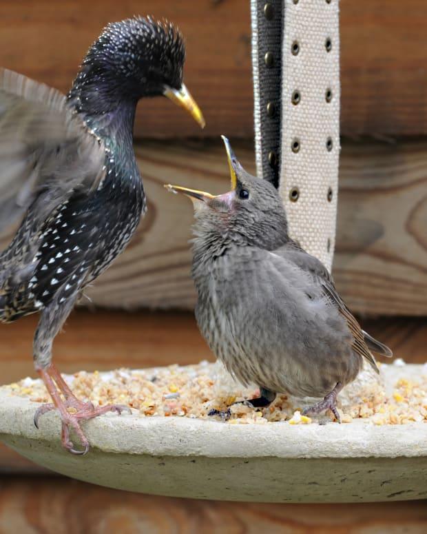 hypertufa-easy-diy-project-decorative-hanging-bird-feeder