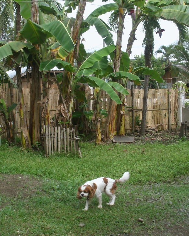 how-to-bring-your-dog-to-the-philippines