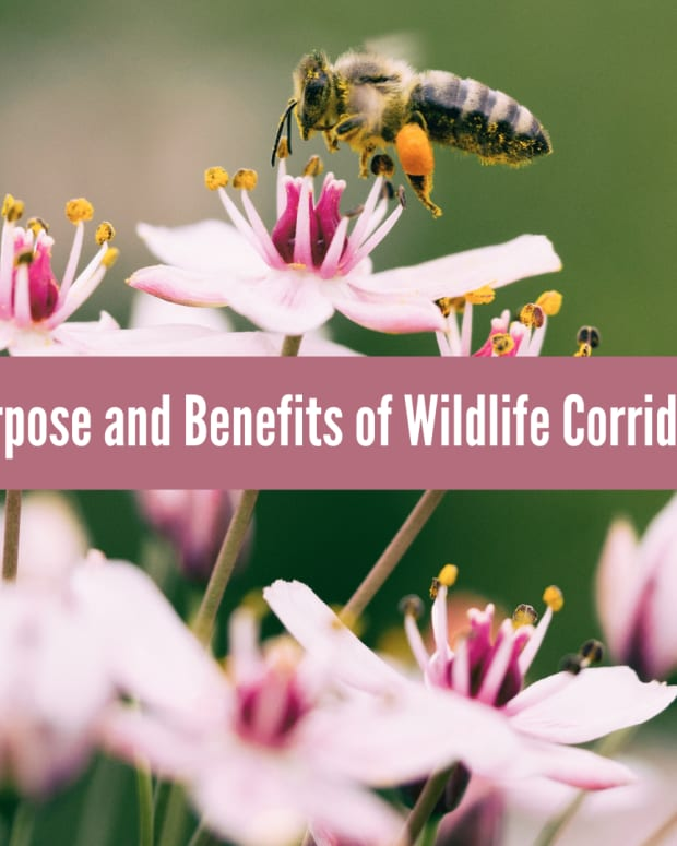 what-is-a-wildlife-corridor