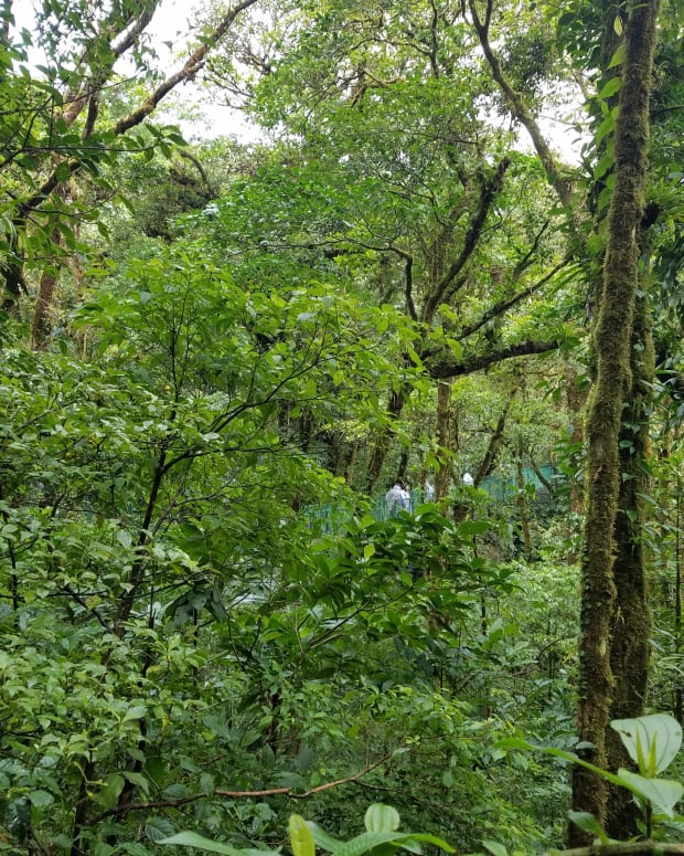 costa-rica-adventure-exploring-monteverde-the-cloud-forest