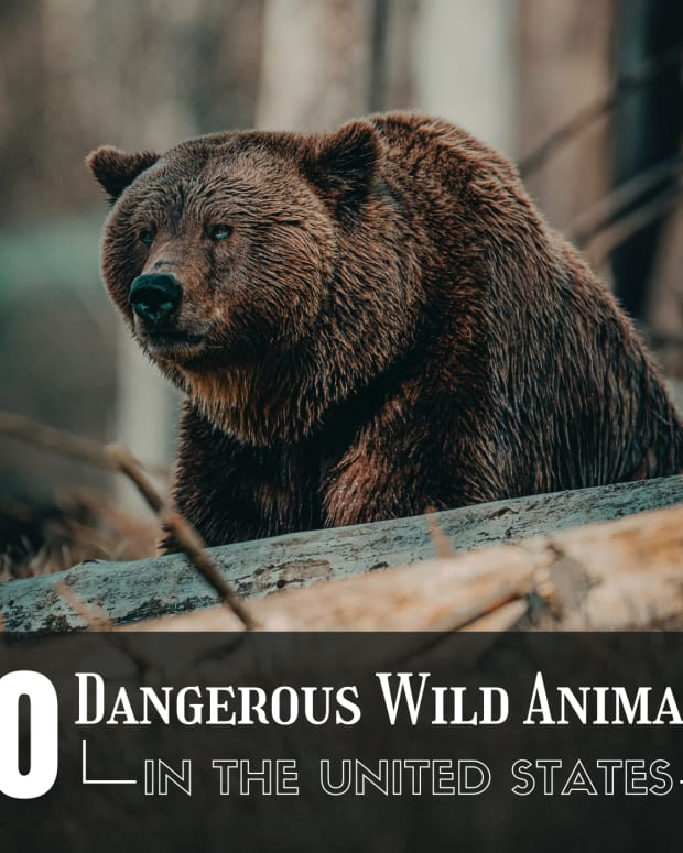 top-10-most-dangerous-animals-in-the-usa
