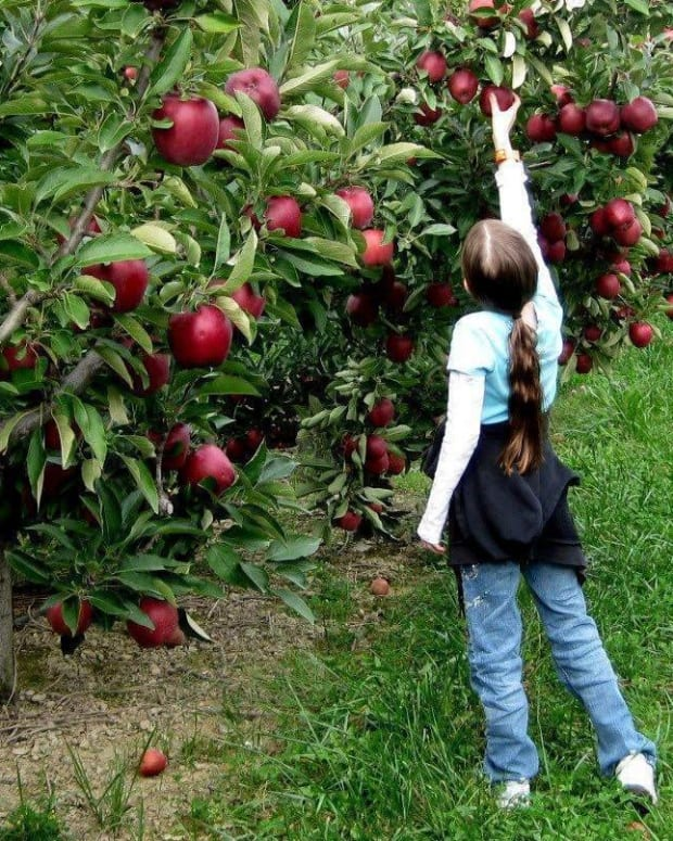 environmental-pollution-and-tree-farming-importance