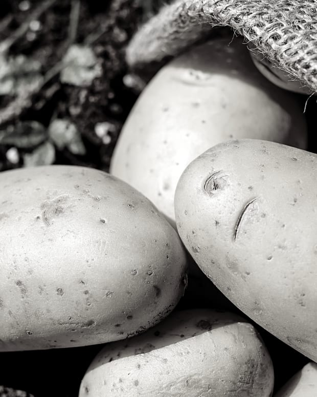 potato-an-acrostic-poem