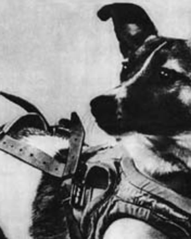 laika-first-dog-in-space