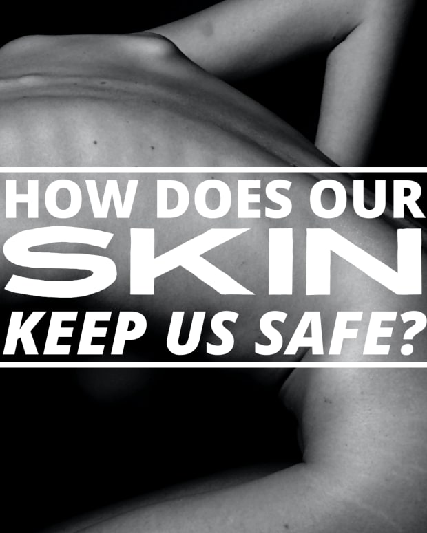 how-skin-protects-the-body