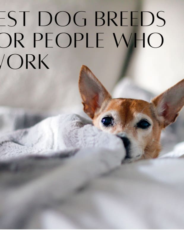 dogs-for-someone-who-works