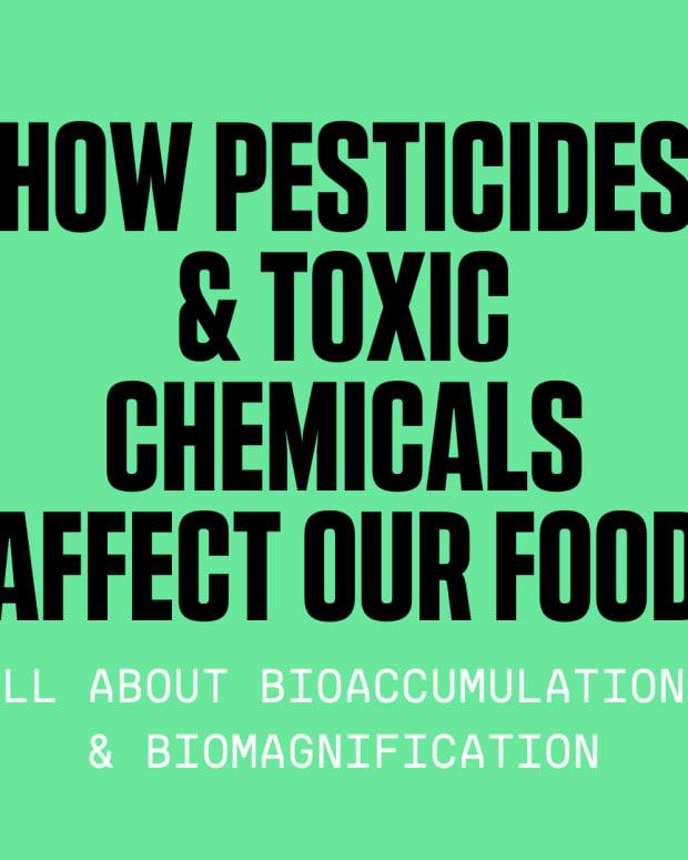 bioaccumulation-and-biomagnification