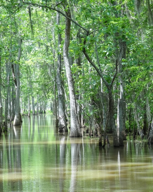 our-life-swamps-of-sameness-my-prose-in-rhymes