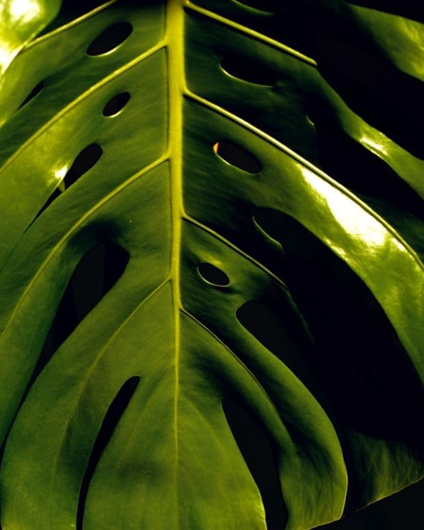 to-swap-or-to-sell-part-2-of-4-what-houseplants-to-propagate-and-how-to-do-it