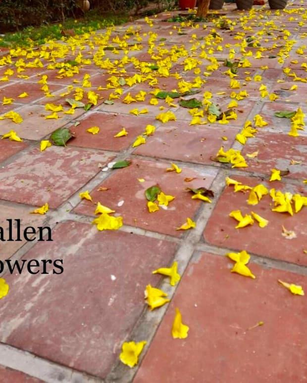 fallen-flowerspoem