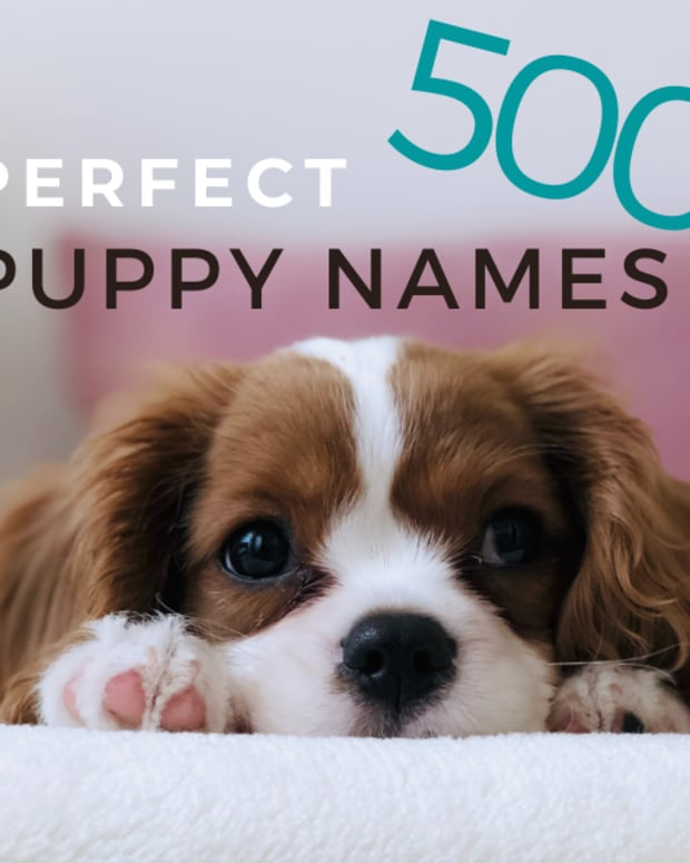 500-perfect-puppy-names