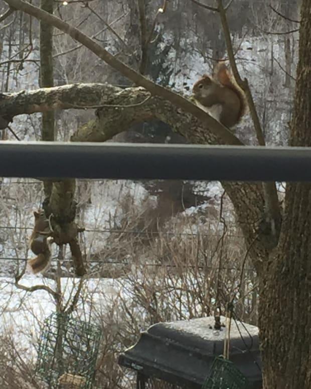 sneaky-squirrels