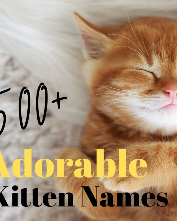 500-perfect-kitten-names