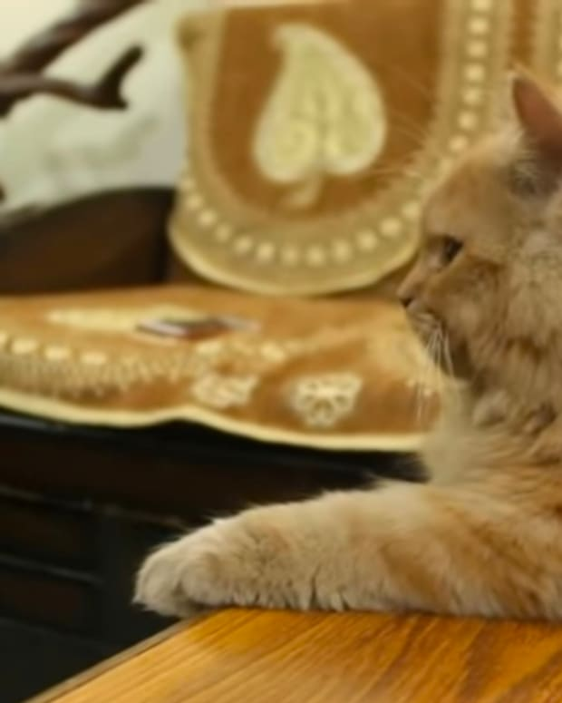 persian-cats-what-are-they