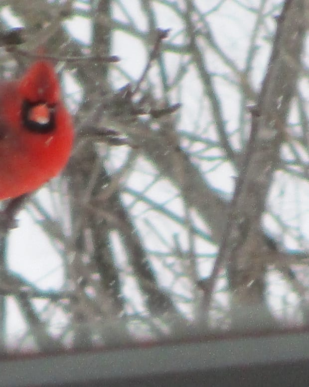 snow-bird-feeders