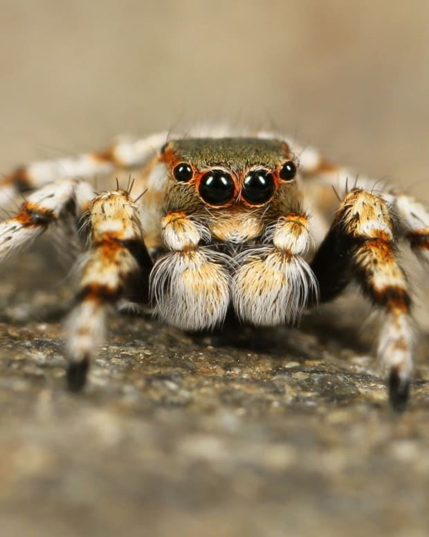 facts-about-spiders-on-earth