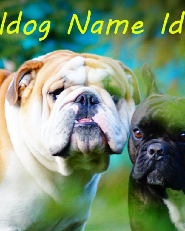 good-bulldog-name-ideas