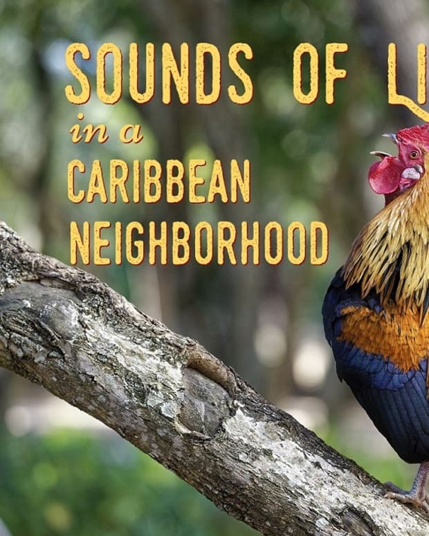 regular-sounds-in-a-caribbean-rural-neighborhood