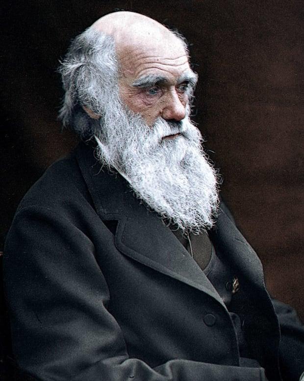 the-victorian-beard-craze