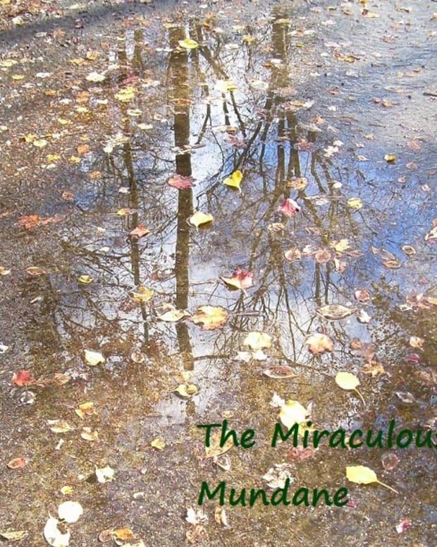 the-miraculous-mundane