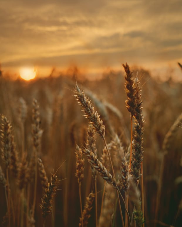 the-pentecost-harvest-and-the-rapture-of-the-bride