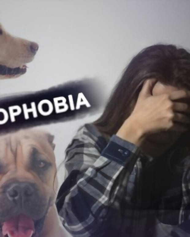 what-is-cynophobia