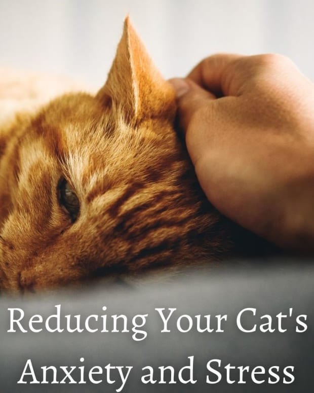 how-to-reduce-a-cats-anxiety-and-stress