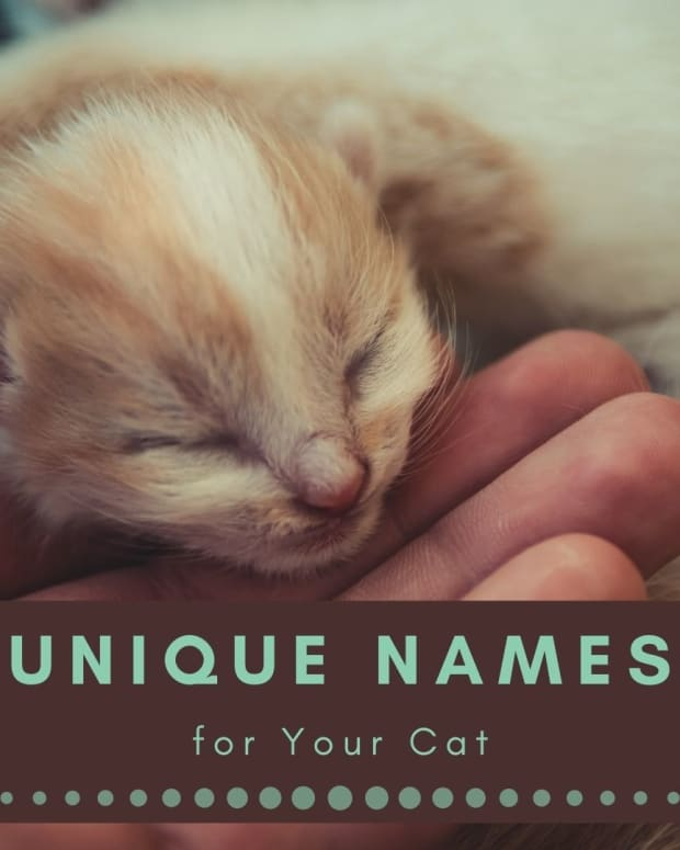 cat-names-choosing-can-be-difficult