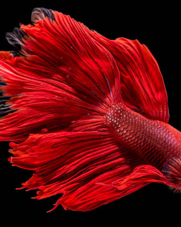 15-most-beautiful-fishes-around-the-world