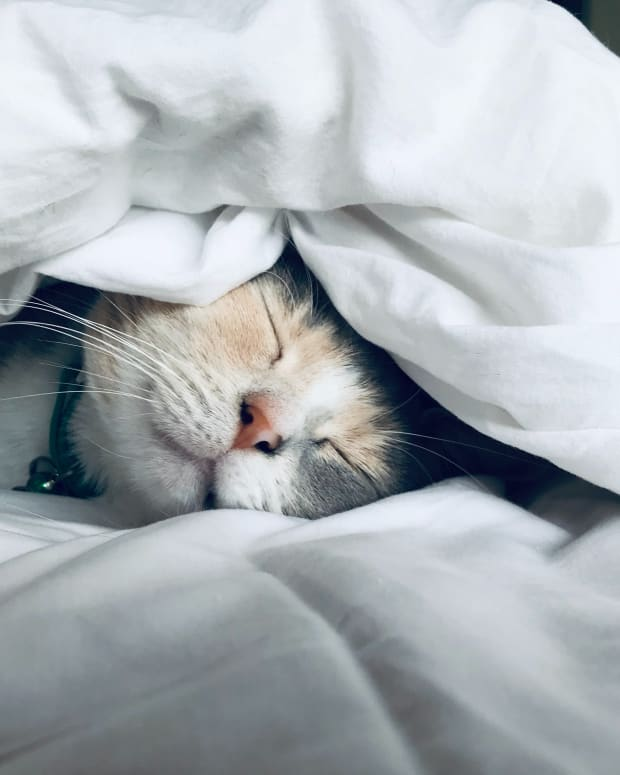 cat-and-their-sleep--interesting-facts