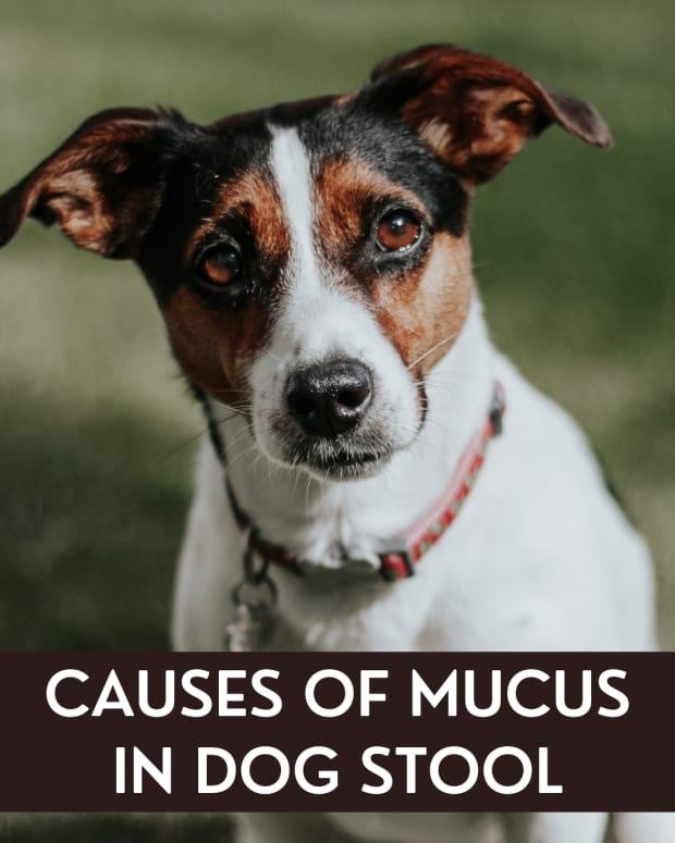causes-of-mucous-in-dogs-stool